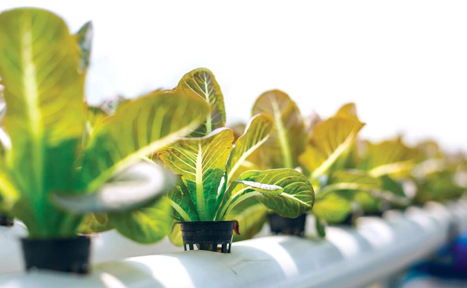 mejor cultivo hidroponico